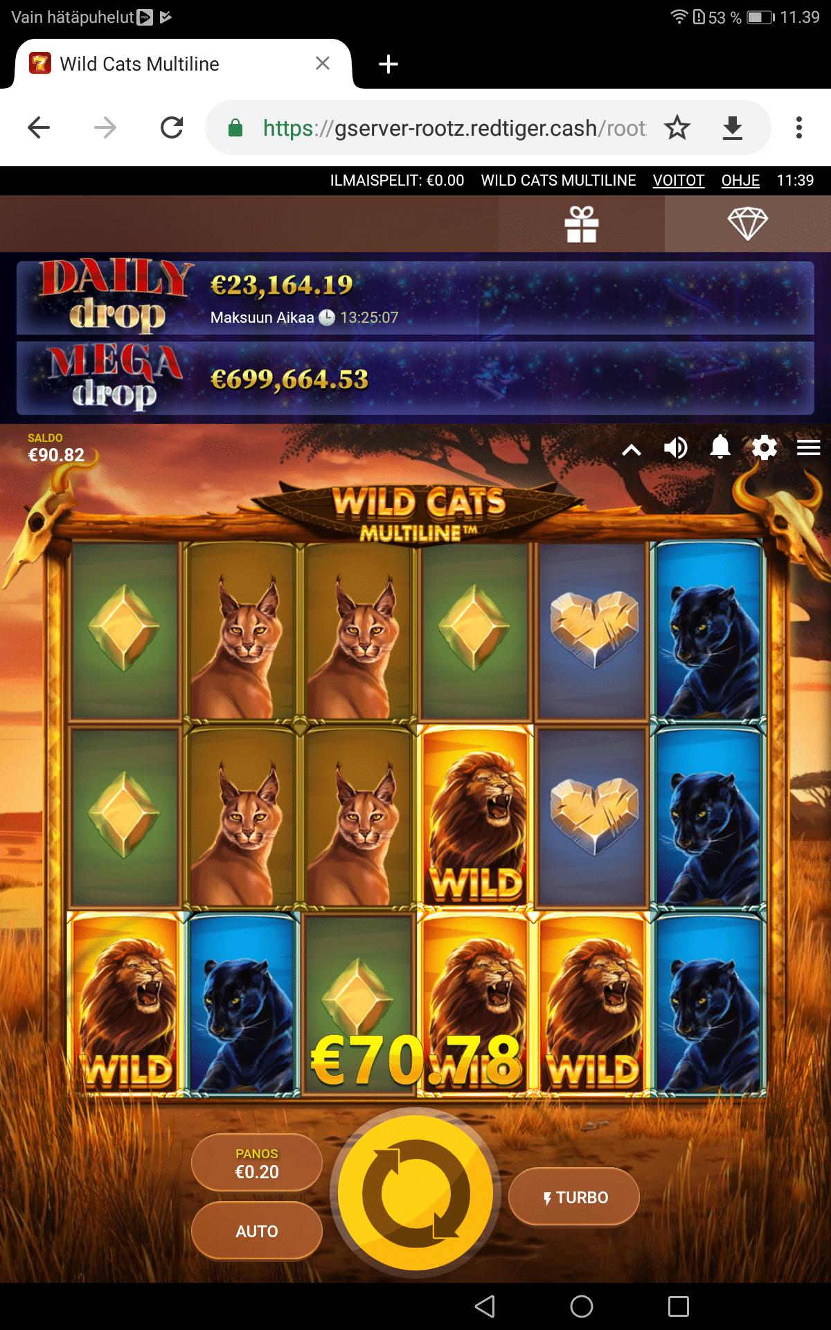 Wild cats Multiline big win picture